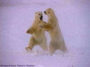 a-polar-dance