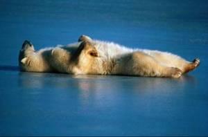 a-polar-sleep1