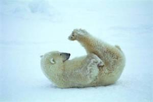some-polar-exercise